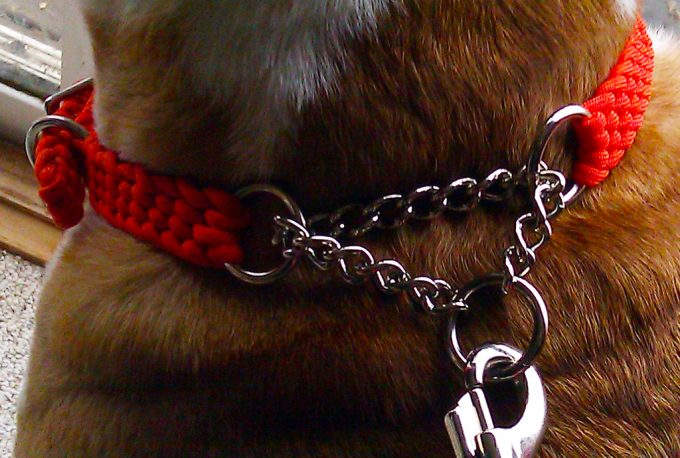 paracord as dog collar