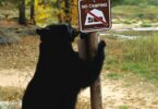 Bear and camping safety