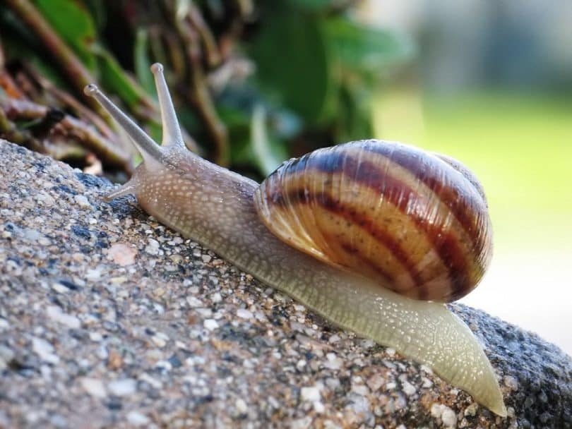 snails and slugs for survival meal
