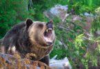 survive wild animal attack