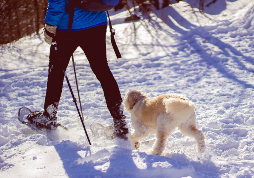 hiker wearing snowshoes on trail with dog