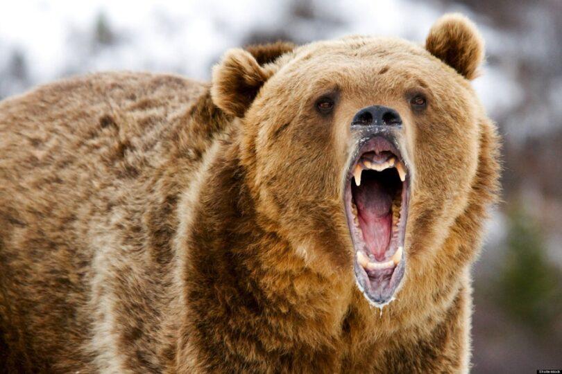 Avoid a bear attack