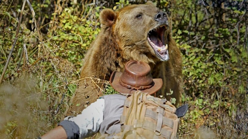 What to Do in A Bear Attack