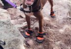 Dog Hiking Boots