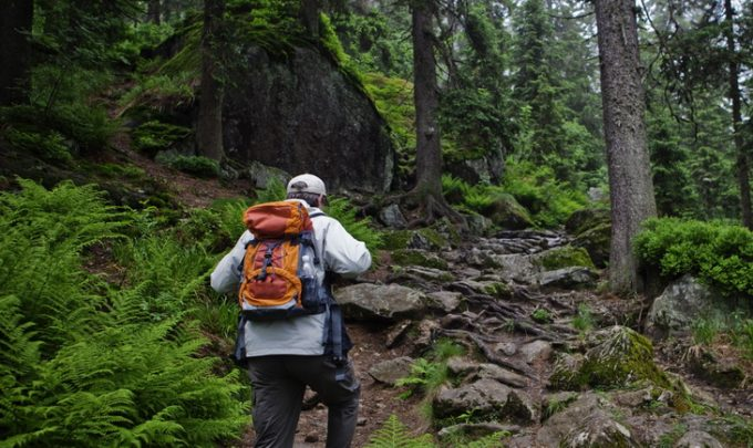 hiker walks through a fairy tale forest