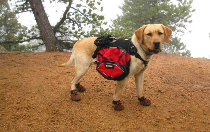 dog wearing hiking boots