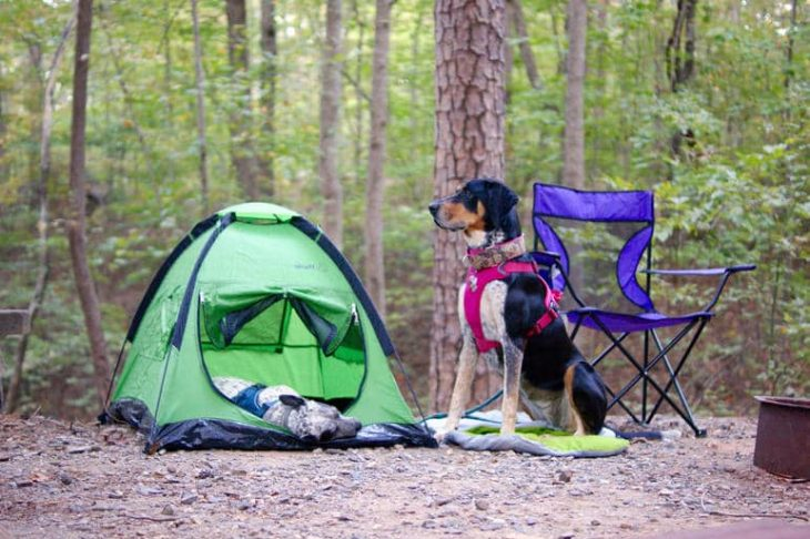 Every camping dog needs a sleeping bag and a house