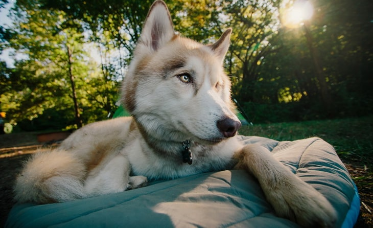 picture of a dog relaxing in a chuckit travel dog bed