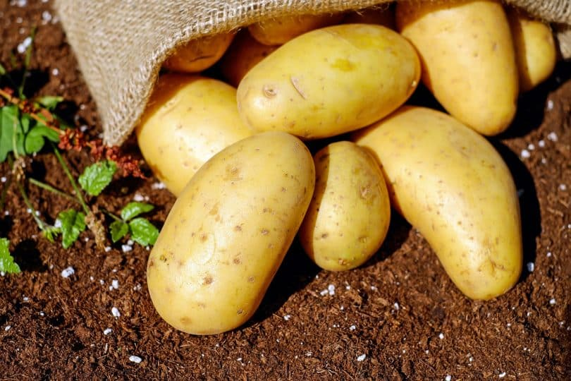 Closeup Photo of Potatoes