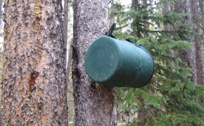 Bear Canister Hanging on a Tree