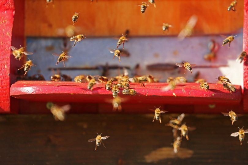 picture of bees flying around