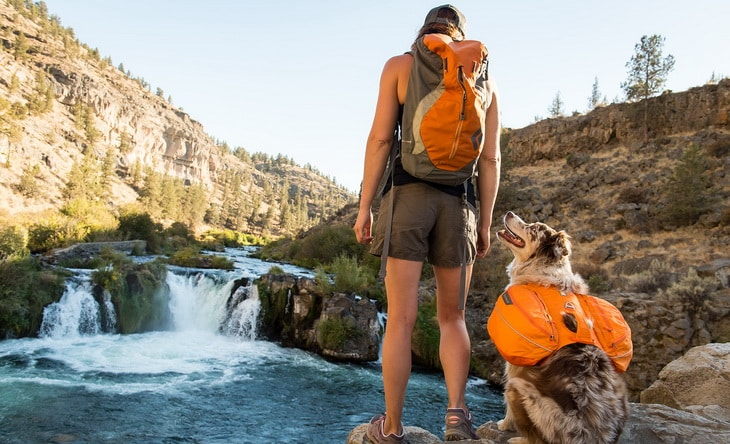 A dog and a hiker with backpacks looking at each other