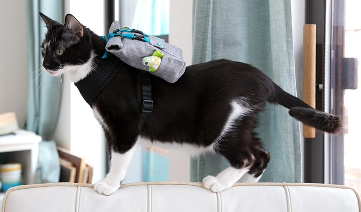 A Cat with a Backpack
