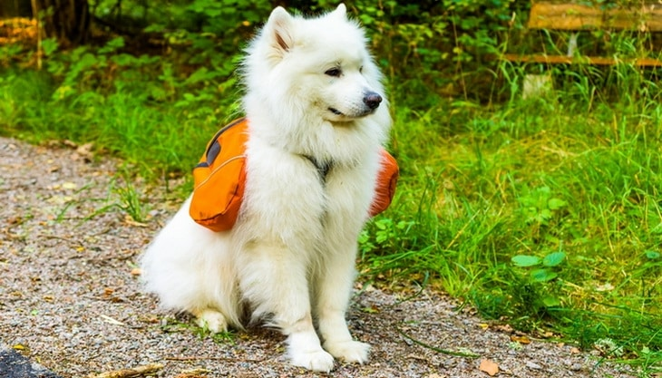 A must-have for hiking and camping with a dog
