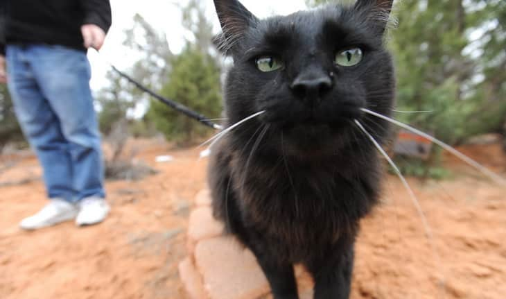close-up photo of a hiking cat