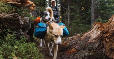 Backpacking With Dogs