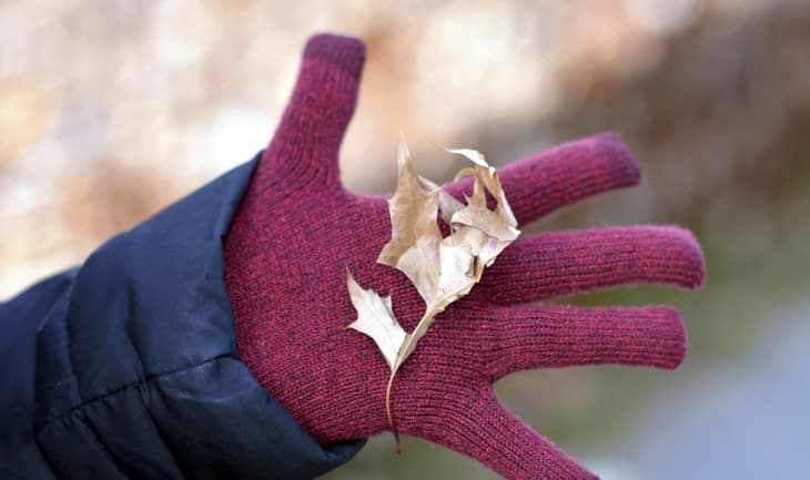 Leaf in hand with red glove.