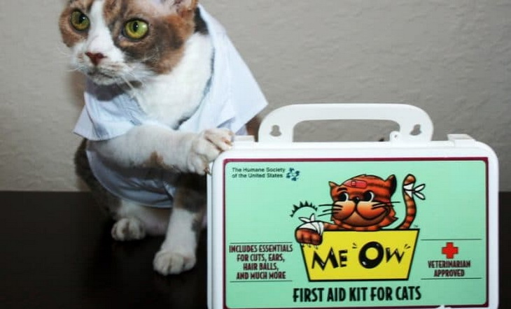 A-Fist-Aid-Kit for cats