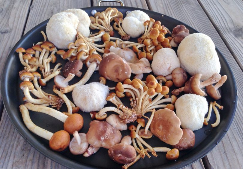 Dehydrating Mushrooms in an Oven Dehydrating Mushrooms in an Oven