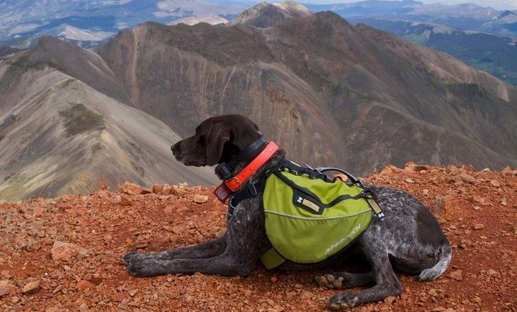 Dog for hiking with a pack