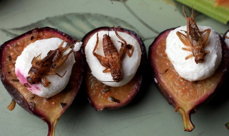 Figs with goat cheese and crickets