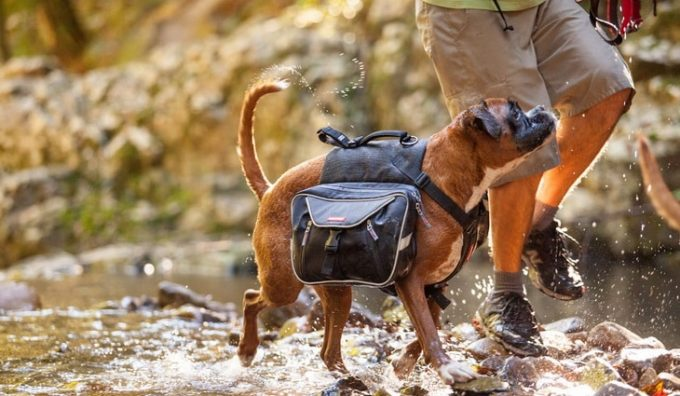 A man hiking with his little dog while is wearing a Hiking Pack for Dogs