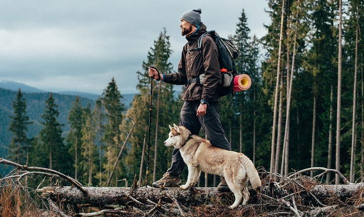 Hiker and a siberian husky dog