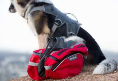 A dog and Ruffwear dog packs