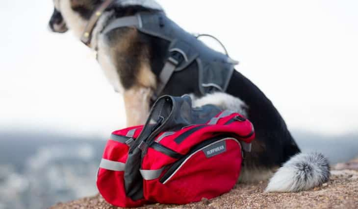 A dog and Ruffwear dog packs