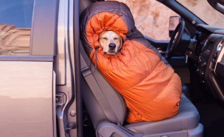 Very cute sleeping bag for a dog to stay warm and comfy