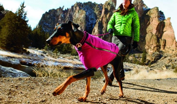 Ruffwear dog wearing a warm winter accesories