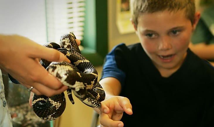 a-brave-boy-touches-a-snake