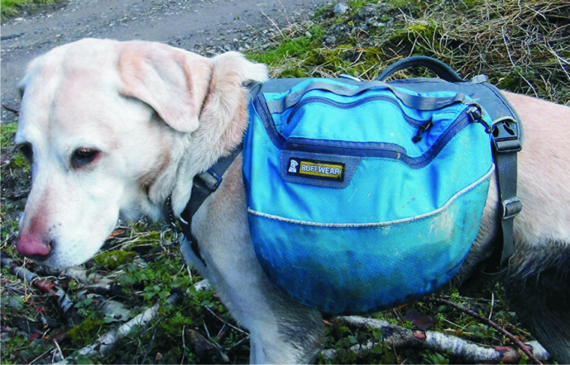 dog-with-hiking-bag