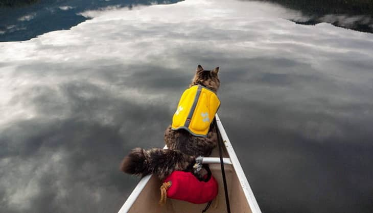 A cat on a boat