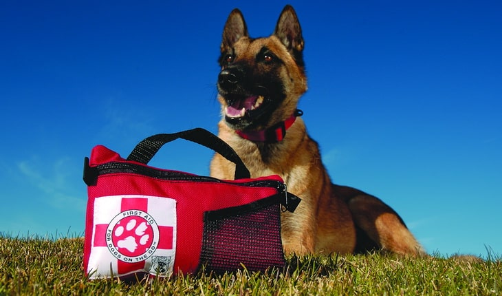 A dog sitting on the grass with a first aid kit