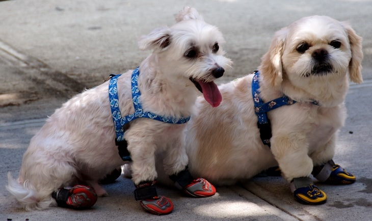 Image showing two dogs-in-sneakers