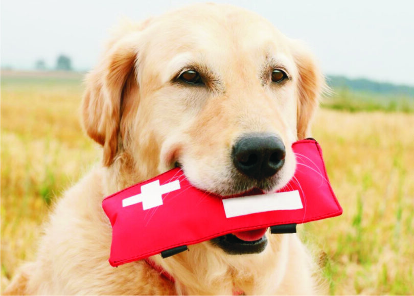 firs-aid-kit-for-dog