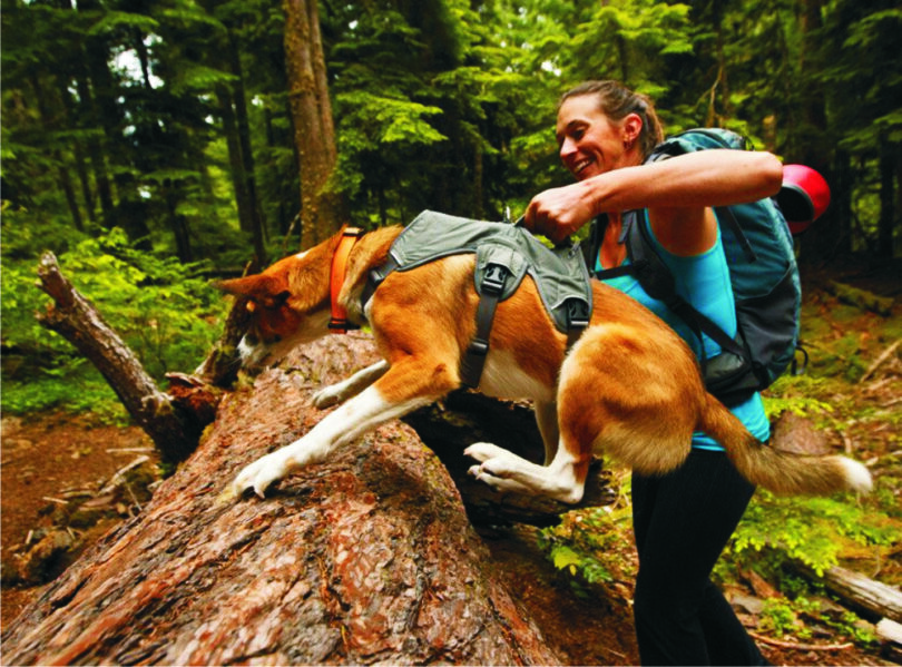Backpacking with Dogs: Essential Tips to Prepare Your Pet