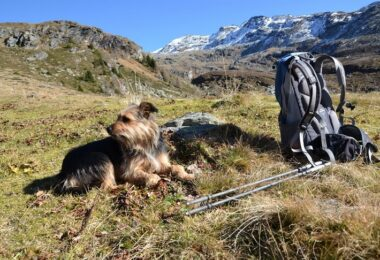 A backpack on the grass, a dog and mountains in the background
