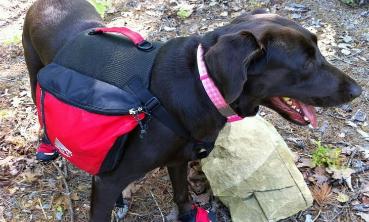 Image showing a hiking-dog with a backpack