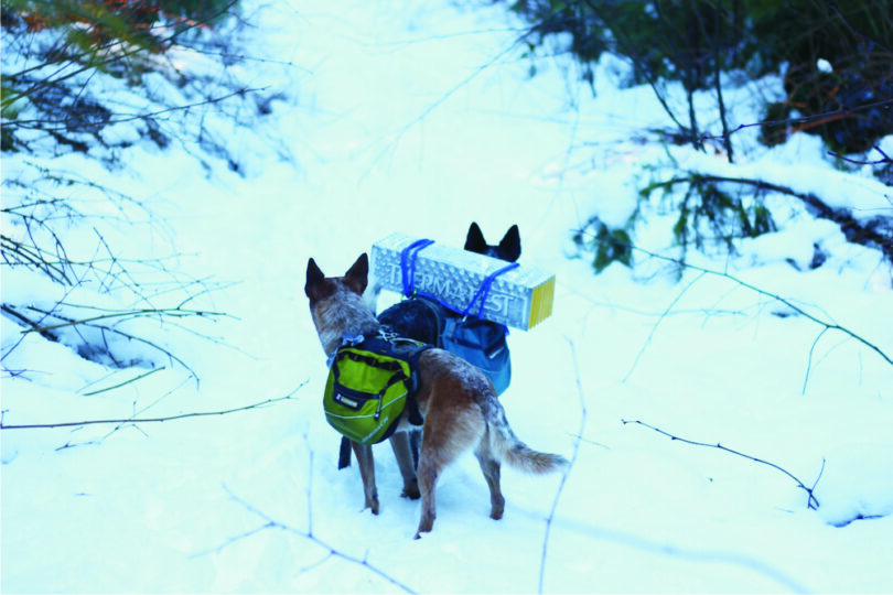 hiking-dogs-in-winter
