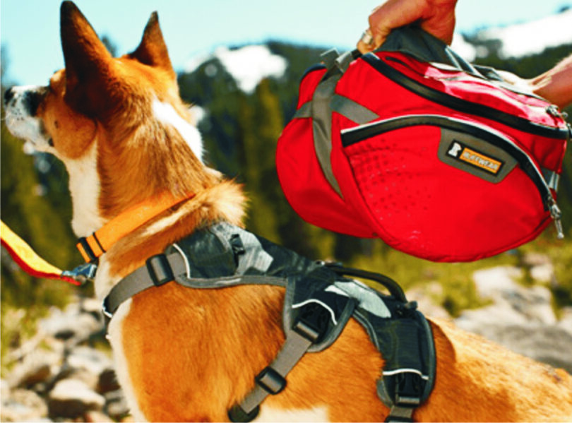 hiking equipment for your dog