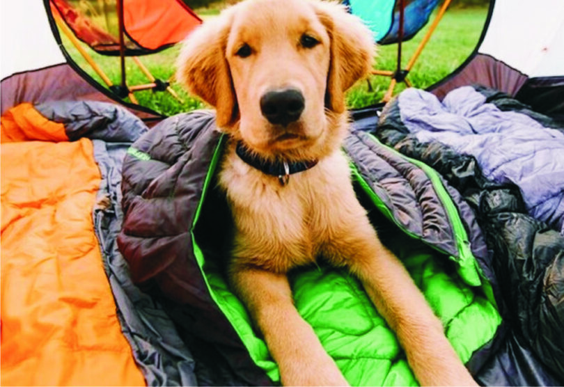sleeping-bag-for-a-dog