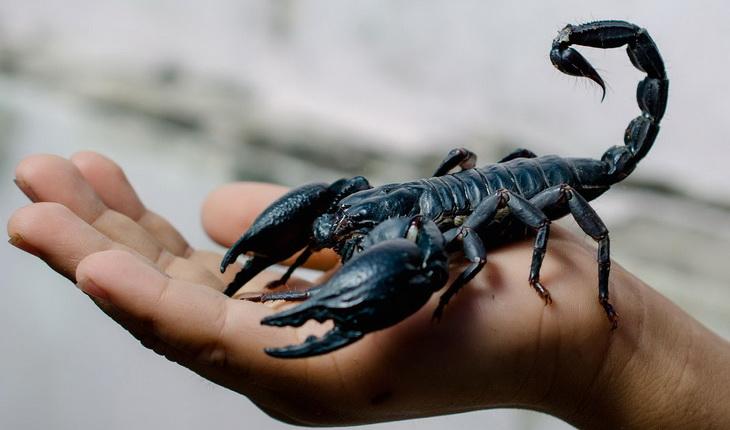 A scorpion sitting on a man's hand