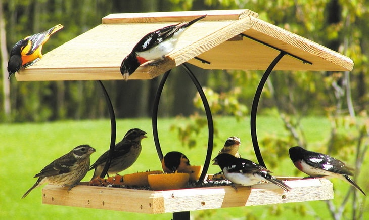 Birds eating from a bird feeder