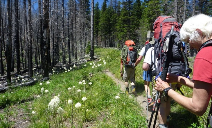 Backpackers on a forest trail