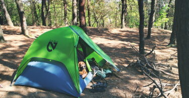 A dog in Nemo Hornet 2P tent in the forest