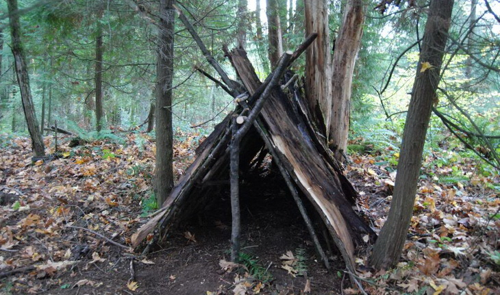 A tree shelter in the forest
