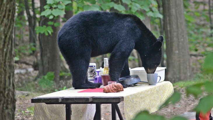 Clean dishes can attract bears