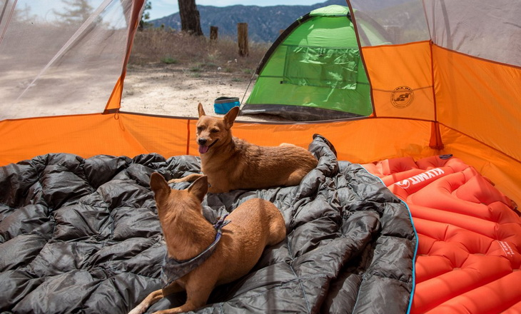 Two little dogs sitting on Klymit Static V2 Inflatable Sleeping Pads in a tent